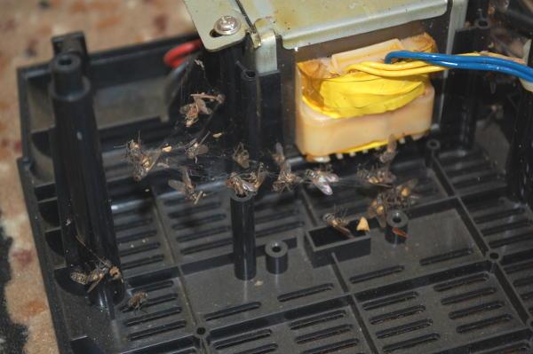 злые и неблагодарные мухи